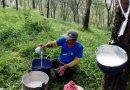 Indonesia Dorong Peningkatan Konsumsi Domestik Karet Alam